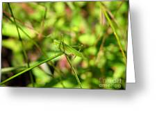 Spring Hopper Greeting Card