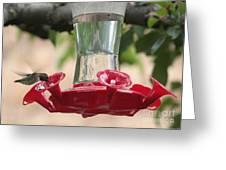 Spring Hummingbird At Feeder Greeting Card