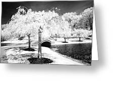 Spring In Infrared Greeting Card