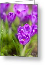 Spring In The Garden Greeting Card