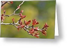 Spring Leaves Greeting Card Blank Greeting Card