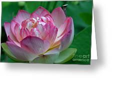 Spring Lotus-08 Greeting Card