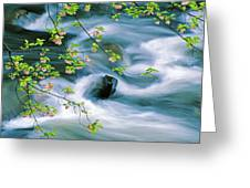 Spring Middle Prong Little River Greeting Card
