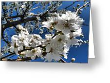 Spring Pear Blossoms 2012 Greeting Card by Joyce Dickens