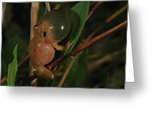 Spring Peeper Greeting Card by Bruce J Robinson