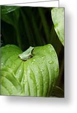 Spring Peeper Greeting Card by Jon Lord