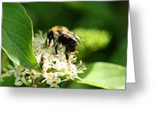 Spring Pollination Greeting Card