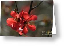 Spring Pop Greeting Card