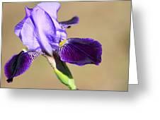Spring Purple Greeting Card