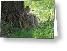 Spring Rabbit Greeting Card