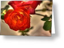 Spring Rose Greeting Card