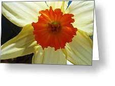 Spring Shines Brightly Greeting Card