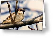 Spring Sparrow Set 1 Greeting Card