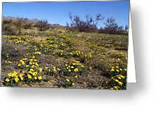 Spring Surprise Franklin Mountains Greeting Card