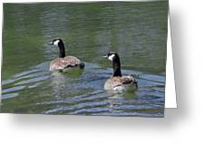 Spring Thaw Water Geese Greeting Card