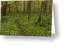 Spring Trail Scene 5 A Greeting Card