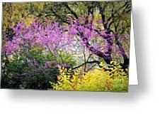 Spring Trees In San Antonio Greeting Card