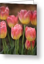 Spring Tulips Greeting Card