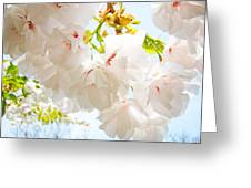 Spring White Pink Tree Flower Blossoms Greeting Card
