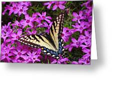 Spring's Beauty Greeting Card by Crystal Joy Photography