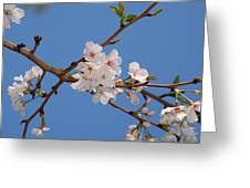 Springs In The Air Greeting Card