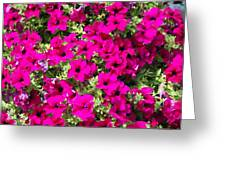 Springtime Flowers Greeting Card