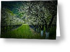Springtime In The Orchard II Greeting Card