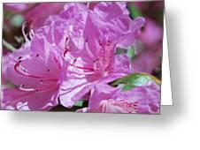 Springtime Pinks Greeting Card