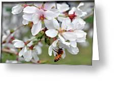 Springtime Weeping Cherry Tree Greeting Card