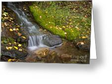 Sprinkle Of Autumn Greeting Card