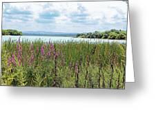 Spruce Run Greeting Card