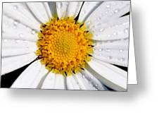 Square Daisy - Close Up Greeting Card