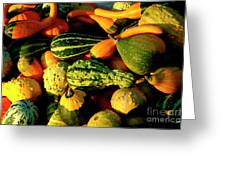 Squash In Morning Light Greeting Card