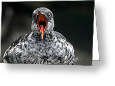 Squawk Greeting Card
