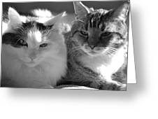 Squeaker And Austin Greeting Card