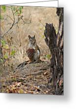 Squirrel And Cone Greeting Card