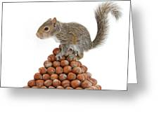 Squirrel And Nut Pyramid Greeting Card by Mark Taylor