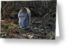 Squirrel At Base Of Tree - C2074b Greeting Card