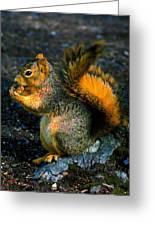 Squirrel At Riverfront Park Greeting Card