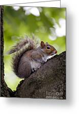 Squirrel Before Green Leaves Greeting Card