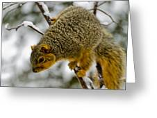 Squirrel Dive Bomber Greeting Card