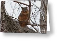 Squirrel Eating In The Frost Greeting Card