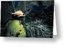 Squirrel Fish Greeting Card