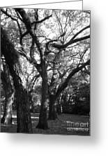 Squirrel Grove Greeting Card
