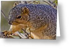 Squirrel Having A Heart Attack Greeting Card