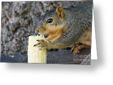 Squirrel Holding Corn Greeting Card