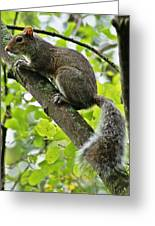 Squirrel IIi Greeting Card