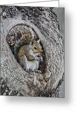 Squirrel In A Knot Greeting Card