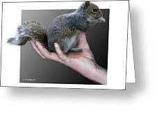 Squirrel In Hand Greeting Card