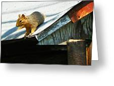 Squirrel On A Hot Tin Roof Greeting Card